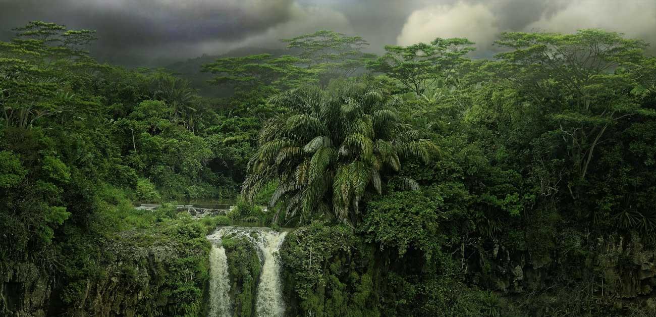 Amazon rainforest cacao fino de aroma farms